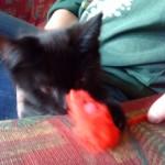 Den rød musa til Veslepus er utrolig populær ^^